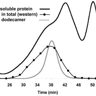 Network of shared mechanisms for oxidative stress response