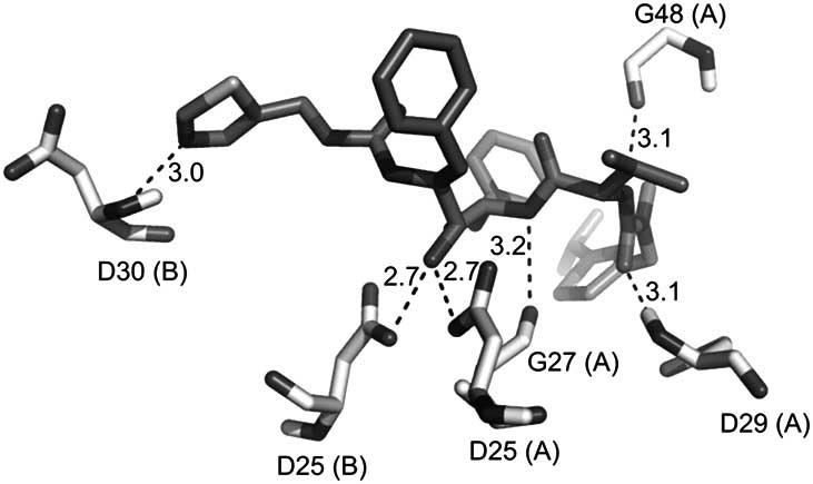 Intermolecular hydrogen bonds observed in the complex HIV