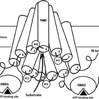 (PDF) Why are second-generation H1-antihistamines
