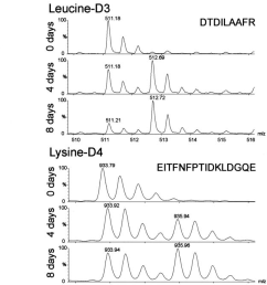 stable isotope labeling of arabidopsis suspension cells with different amino acids a incorporation rate [ 625 x 1350 Pixel ]