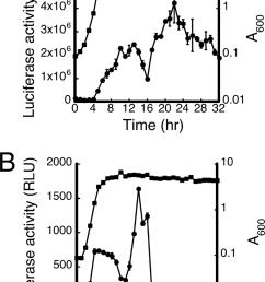 activity of fenp nha cm broth was inoculated with b subtilis download scientific diagram [ 850 x 1252 Pixel ]