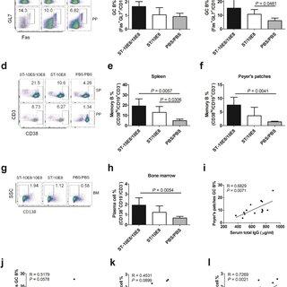 Spleen weight index and splenocyte proliferation activity