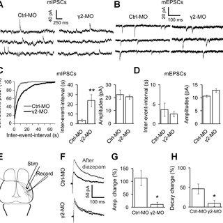 (PDF) Inhibition to Excitation Ratio Regulates Visual