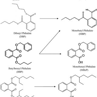 The general chemical structure of a phthalate diester