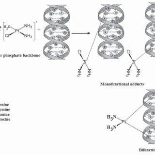 (PDF) Platinum Compounds: A Hope for Future Cancer