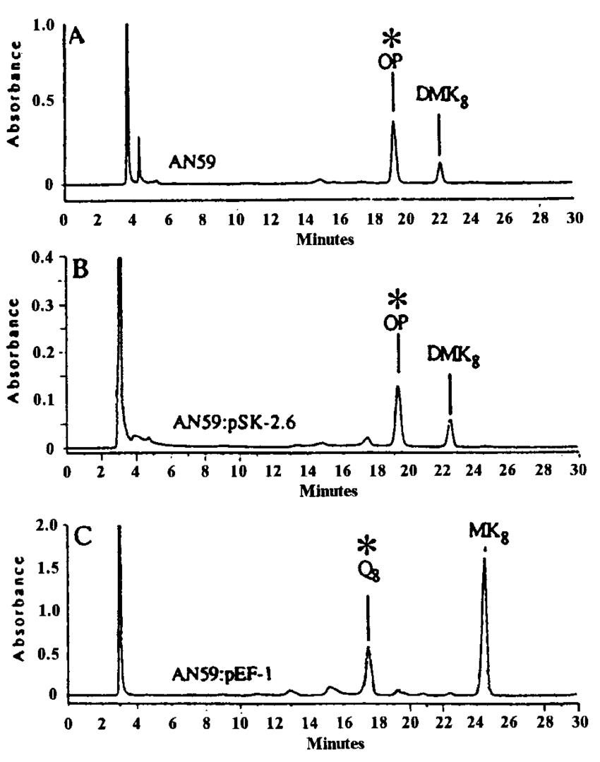 medium resolution of an59 lacks coq 8 and accumulates octaprenylphenol and dmk 8 lipid download scientific diagram