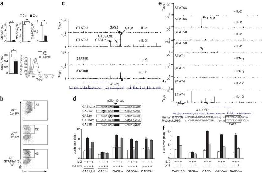 IL-2-induced, STAT5-dependent Il12rb2 expression.(a