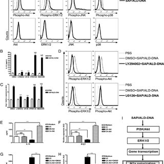 (PDF) Macrophage Differentiation and Polarization via