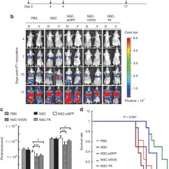 In Vivo Gene Therapy Diagram Prestige Alarm Remote Start Wiring For 4t1 Metastatic Breast Cancer Using Nsc Vsvg Download Scientific