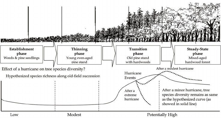Old-field succession on Piedmont and four-stage forest
