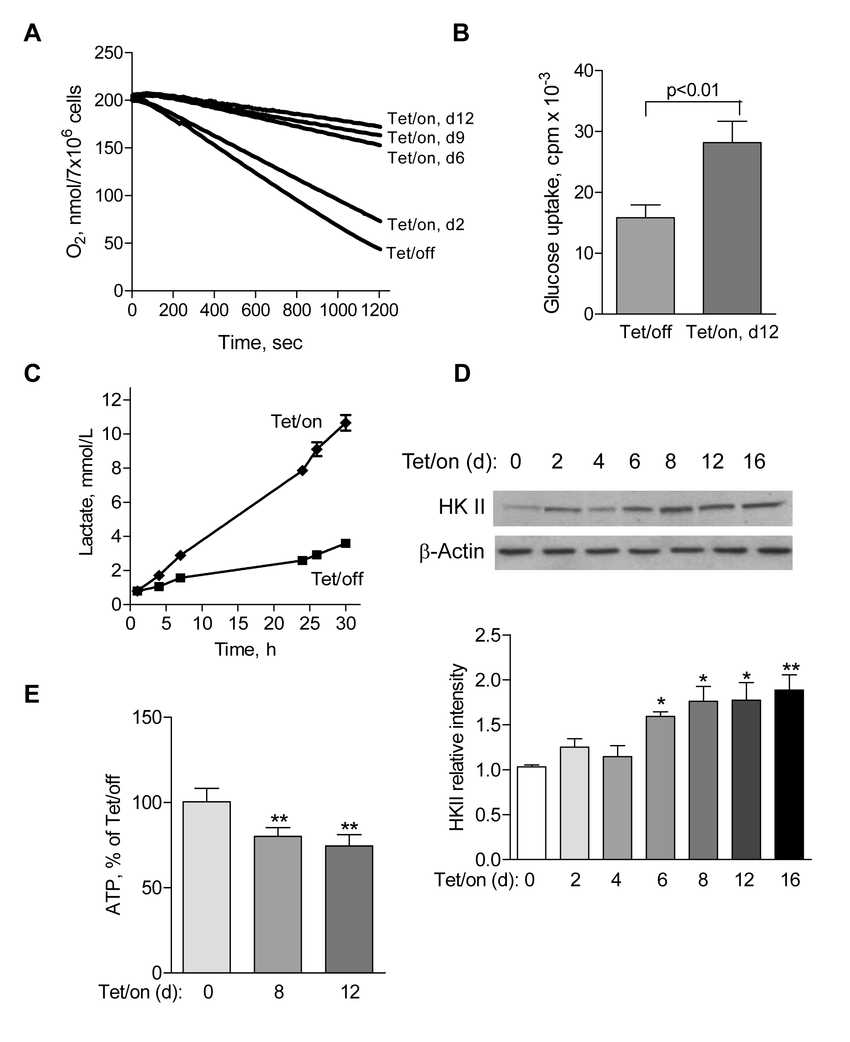 Suppression of mitochondrial respiration by POLGdn