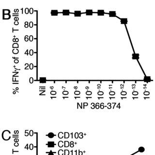 B6 or Batf3o/o mice were inoculated intraperitoneally with
