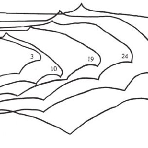 15. Three functional regions of a bat's wing (e.g