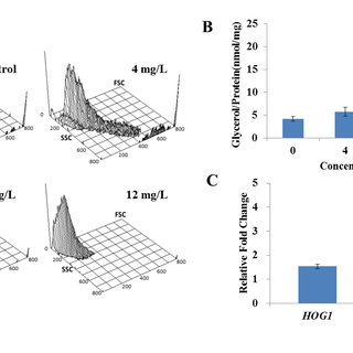 Effect of DD on the cell morphology and intracellular