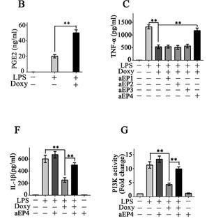 Doxycycline attenuates inflammation in EIU. (A