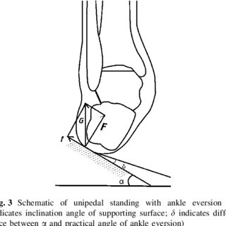 (PDF) Effects of Ankle Eversion. Limb Laterality. and Ankle Stabilizers on Transient Postural Stability During Unipedal Standing