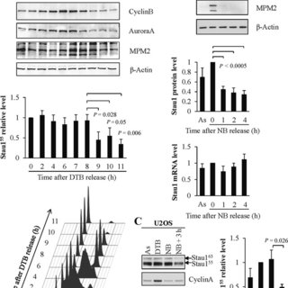 Stau1 is a substrate of the ubiquitin proteasome system