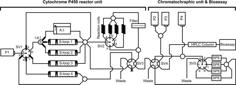 Schematic representation of the on-line bioreactor. P1