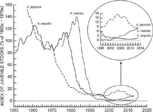 Time trends in abundance of major juvenile eel stocks of