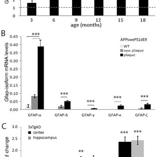 Mouse GFAP-isoform specific antibodies and other