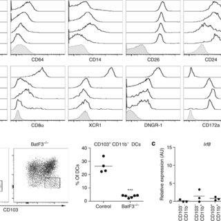 Characteristics of intestinal lymph CD8α+ dendritic cells