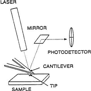 (PDF) Atomic force microscopy and cytochemistry of