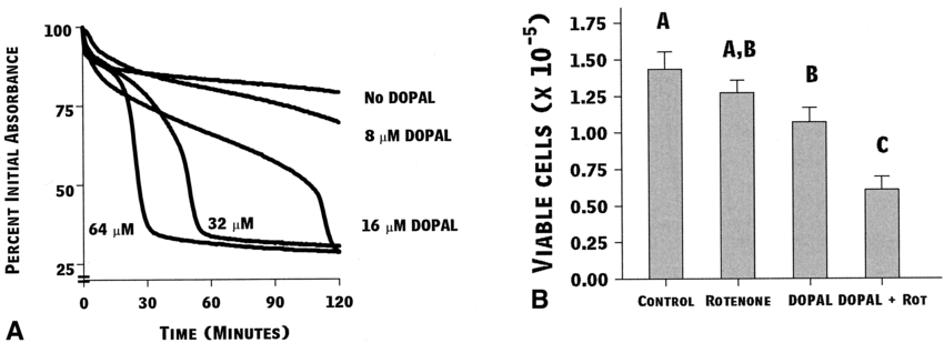 Respiration protects against DOPAL. (A) Representative