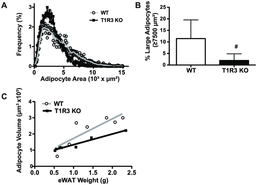 T1R3 KO mice on a Western diet have fewer large adipocytes