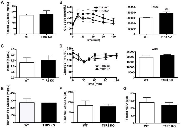 A) Fasted glucose of WT (n = 6) and T1R3 KO (n = 9) mice