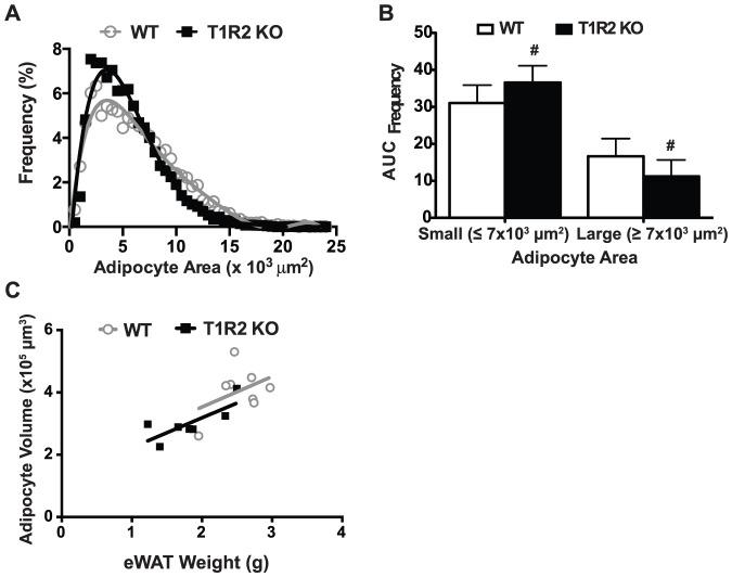 T1R2 KO mice have smaller adipocytes but equal adipocyte