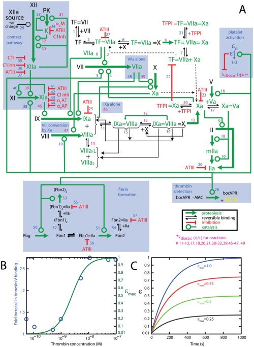 small resolution of schematic of the platelet plasma model a wiring diagram of the platelet