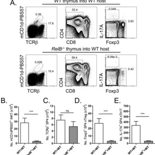 Constitutive expression of inducible nitric oxide synthase