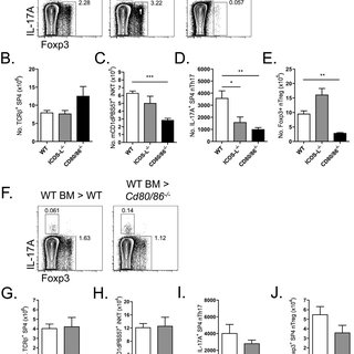 (PDF) Natural Th17 cells are critically regulated by