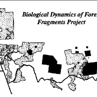 (PDF) An Amazonian rainforest and its fragments as a