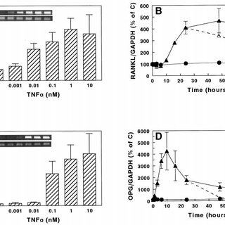 (PDF) Receptor Activator of NF- B and Osteoprotegerin