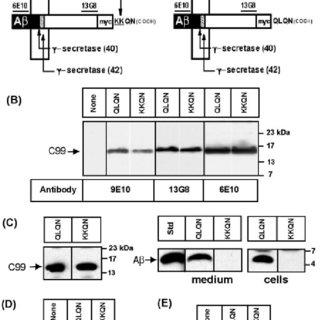 (PDF) Retention of the Alzheimer's Amyloid Precursor