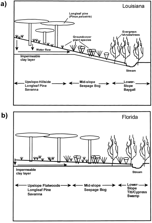 small resolution of diagrammatic representation of plant communities arrayed along download scientific diagram
