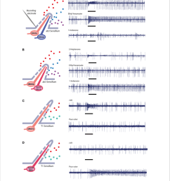 single sensillum electrophysiological recordings in ab3 empty neuron system a wild [ 850 x 962 Pixel ]