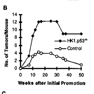 Abnormal centrosome ampli®cation in HK1.p53 m papillomas