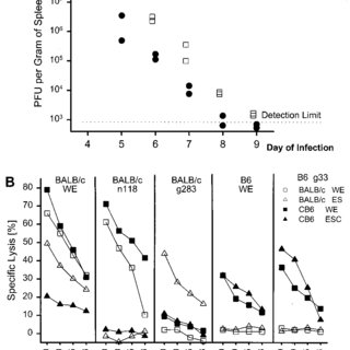 GP33-specific CD8 T-cell numbers in the spleen and liver