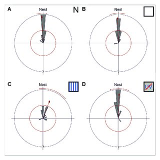 (PDF) The Role of Celestial Compass Information in