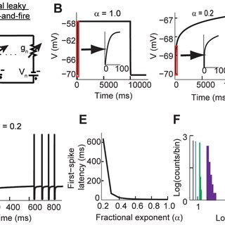 (PDF) Neuronal Spike Timing Adaptation Described with a
