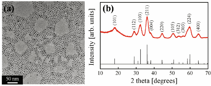 (Color online) (a) TEM image of Mn3O4 NPs. (b) X-ray