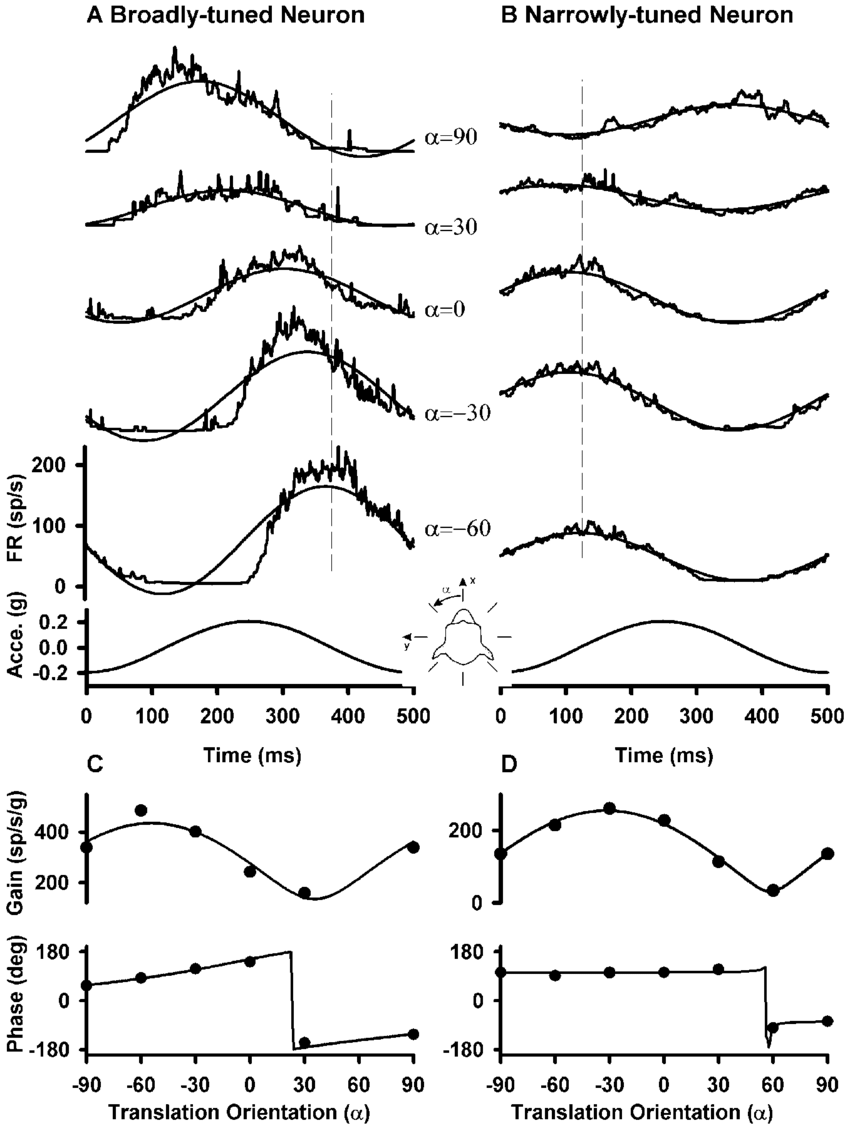 Fig 1a d discharge patterns of a broadly tuned neuron a and