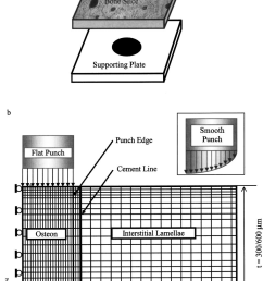 schematic illustration of an osteon pushout test a and the associated axisymmetric finite element [ 850 x 1331 Pixel ]