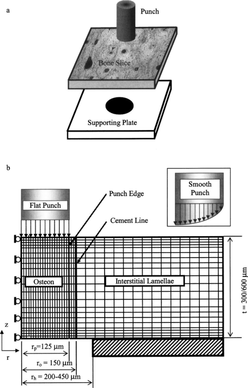 small resolution of schematic illustration of an osteon pushout test a and the associated axisymmetric finite element