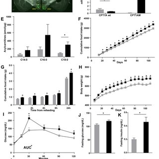 AAV-mediated CPT1AM expression in the VMH would increase