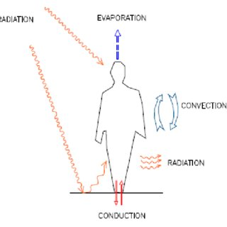 Human Mechanical Energy Human Forces Wiring Diagram ~ Odicis