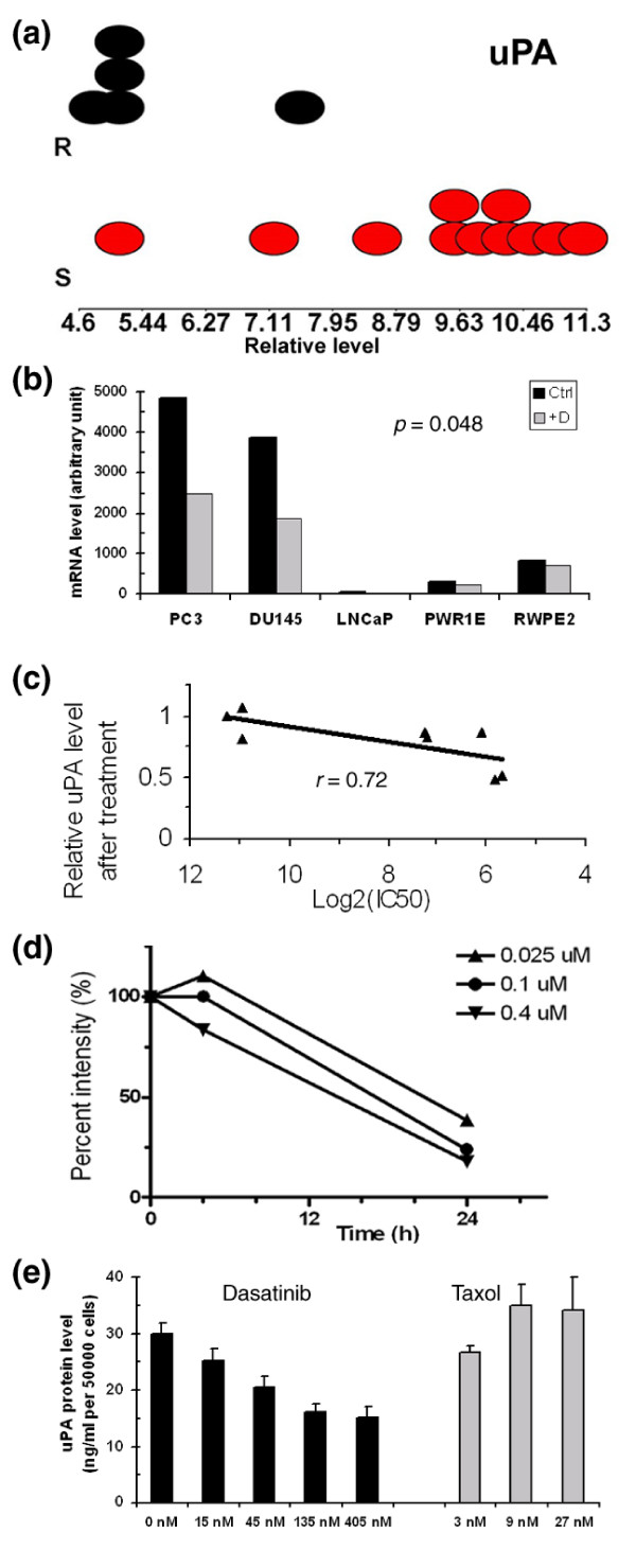 PA gene expression and regulation by dasatinib analyzed at