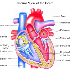 Interior Heart Diagram Toilet Schematic 1 Shows The Anatomy From Anterior And Views Download Scientific